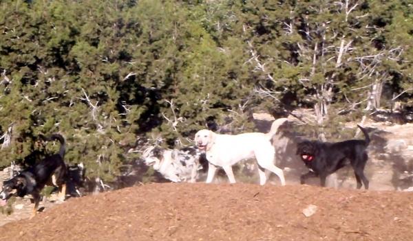 Dog Boarding Wimberley Texas