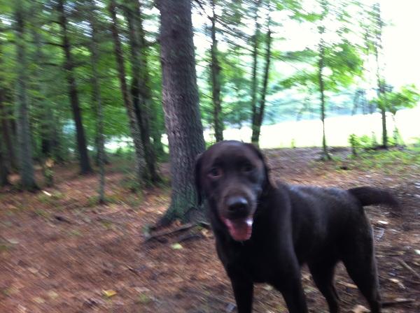 Dog Boarding Winchester Ma
