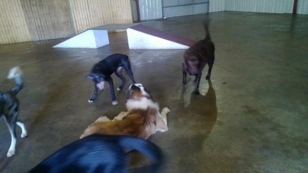 Dog Boarding Winona Mn