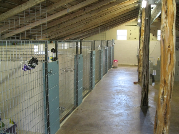 Blanco kountry kennels white gold for Boarding facility for dogs