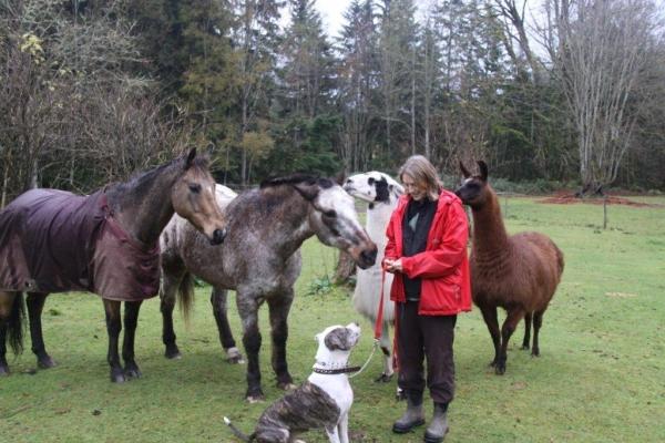 mystic mountain pet retreat in monroe washington wa