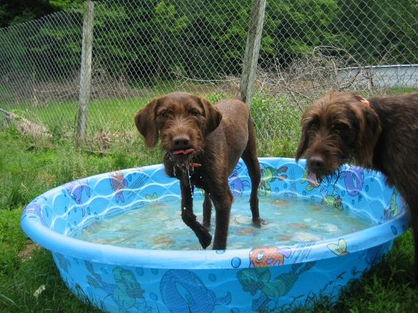 Prima Dogga In Shelburne Vermont Vt