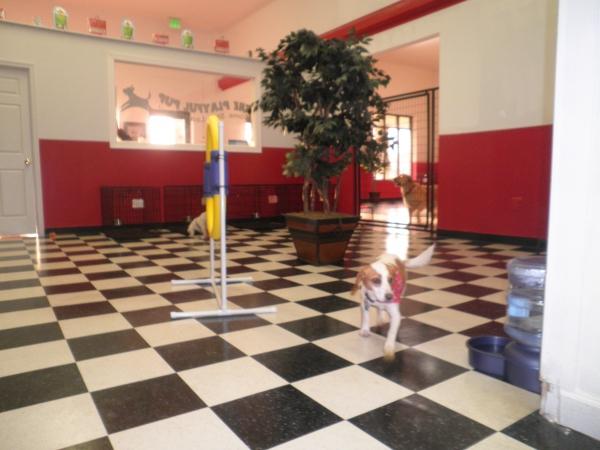 Dog Day Care Waldorf Md