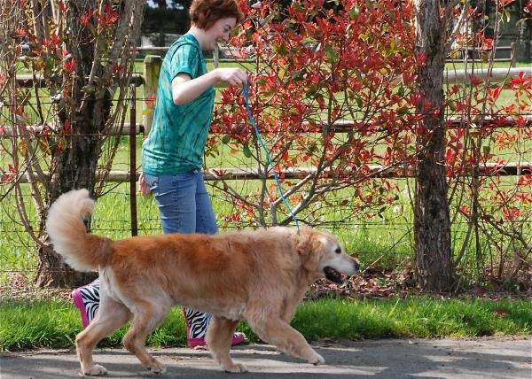Dog Grooming Monroe Washington
